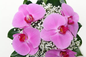 bouquet palahenopsis arriba