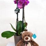 orquideas-moradas