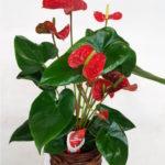 planta-flor-roja