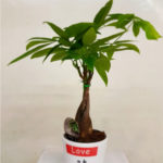 planta-tronco-hojas-verdes