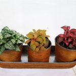 plantas-tres-colores