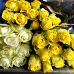 rosas-amarillas-blancas
