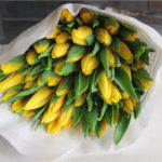 tulipanes-amarillos