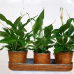plantas-tres-tiestos